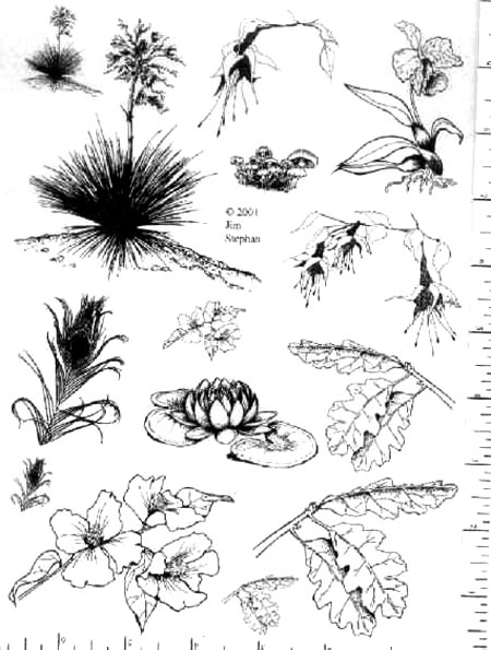 Jim Stephan Rubber Ink Art - 32: Yucca Leaves & Flowers
